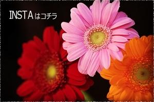 どちらがお好き?氷室椿庭園*プチ撮影会♪_c0037519_00010192.jpg