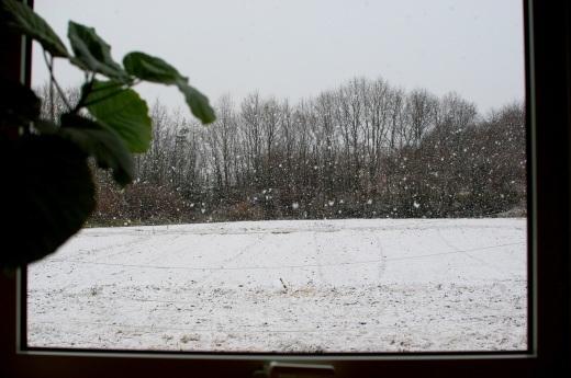 大粒の雪_c0110869_09073239.jpg
