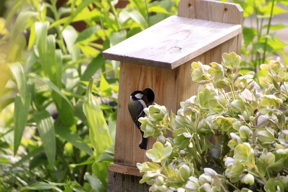 庭の巣箱にシジュウカラが_a0107574_14573140.jpg