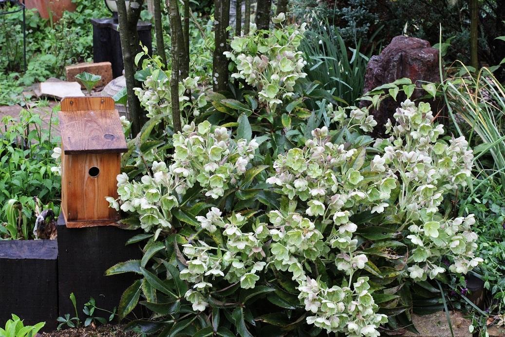 庭の巣箱にシジュウカラが_a0107574_14573837.jpg