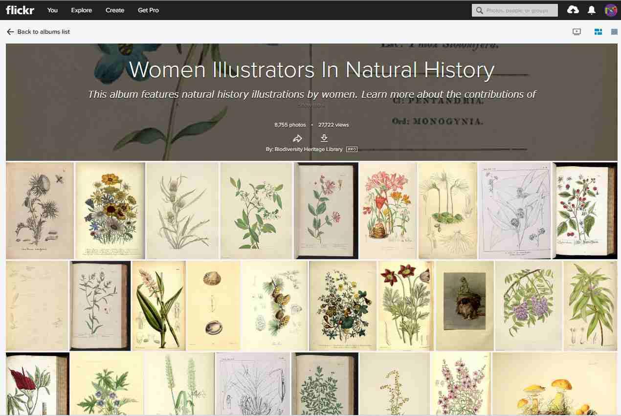 女性イラストレーターによる自然史アートの貢献_c0025115_21322673.jpg