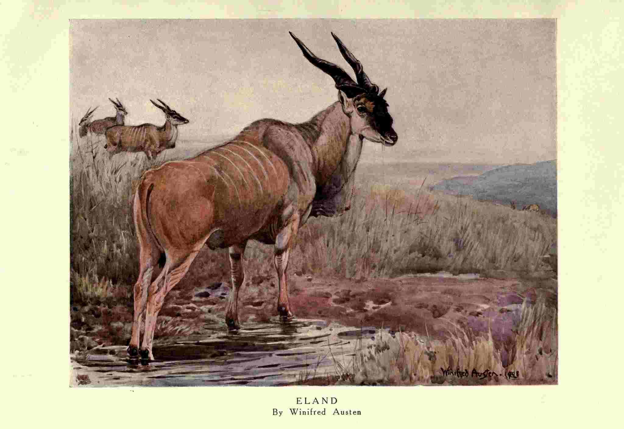 女性イラストレーターによる自然史アートの貢献_c0025115_21361925.jpg