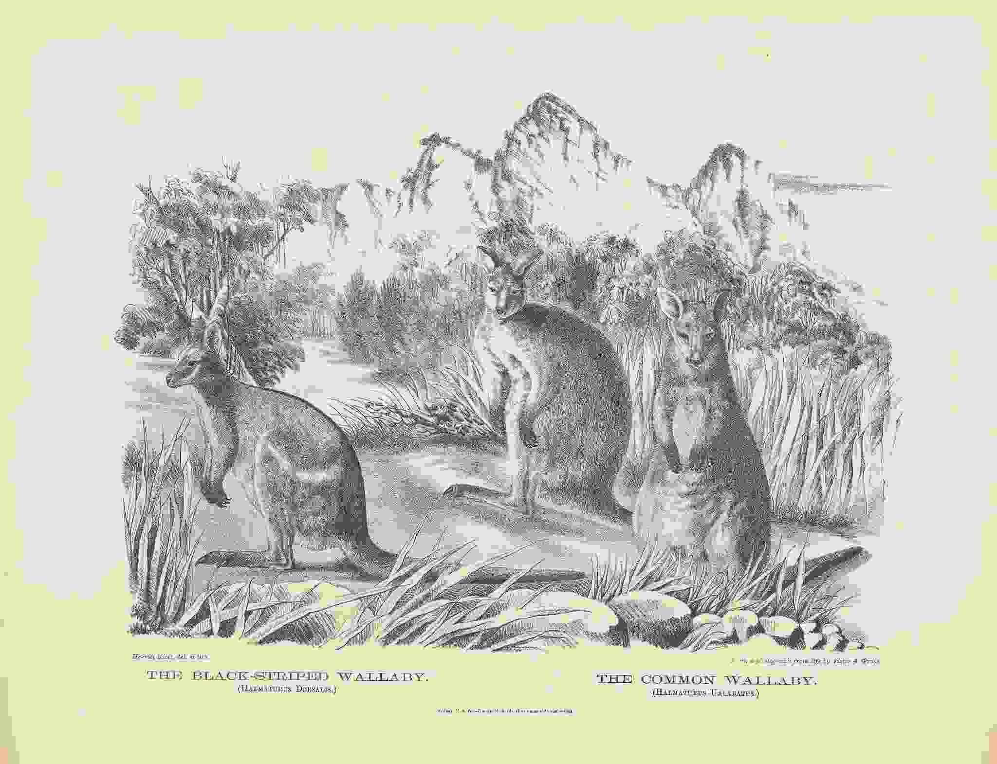 女性イラストレーターによる自然史アートの貢献_c0025115_21365699.jpg