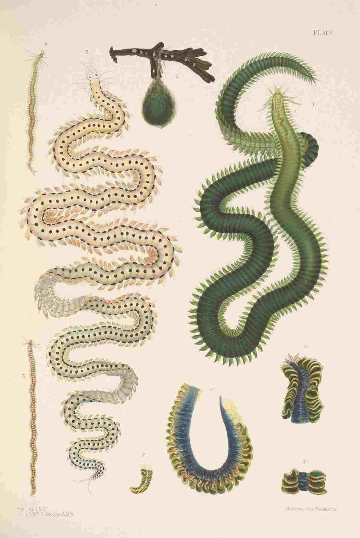 女性イラストレーターによる自然史アートの貢献_c0025115_21394447.jpg