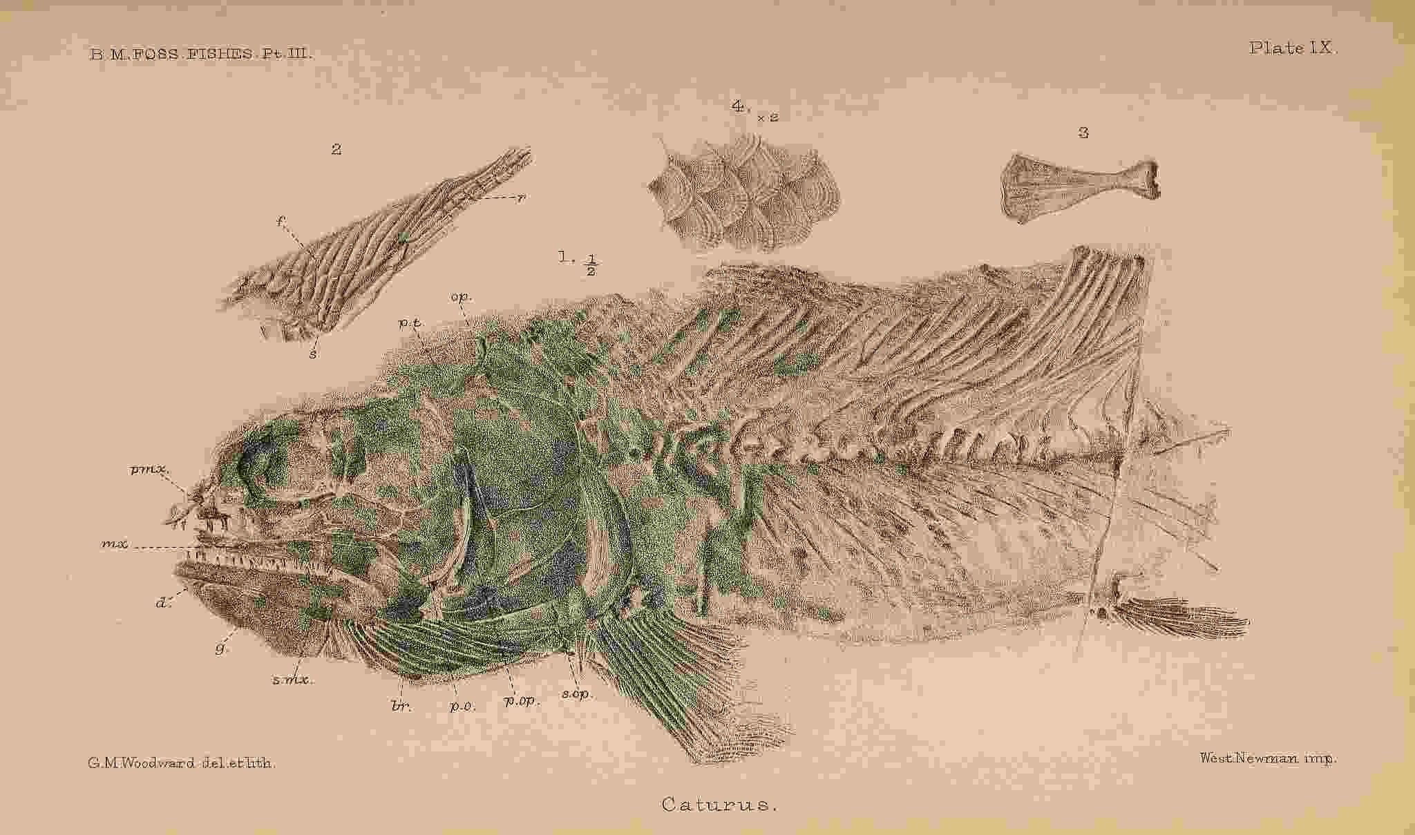 女性イラストレーターによる自然史アートの貢献_c0025115_21400014.jpg