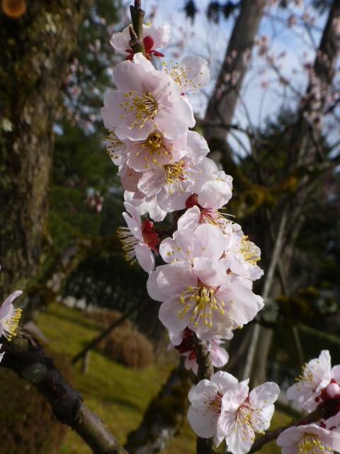 金沢旅行_e0237625_16455543.jpg