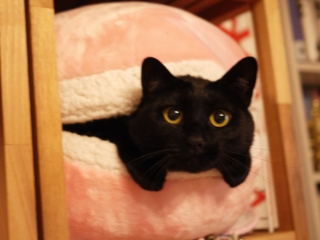 マカロンベッド猫 てぃぁら編。_a0143140_19330978.jpg