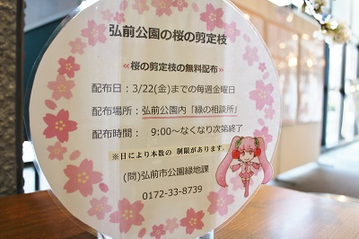 観光館の剪定桜と検定上級解答掲示について_d0131668_1612591.jpg
