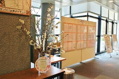 観光館の剪定桜と検定上級解答掲示について_d0131668_1613597.jpg