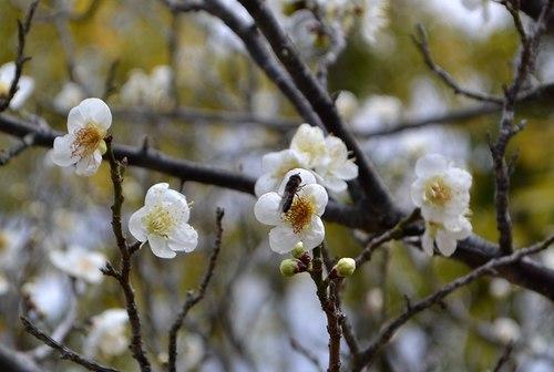 梅は咲いたが桜はまだまだ ・・・_b0102572_15244549.jpg