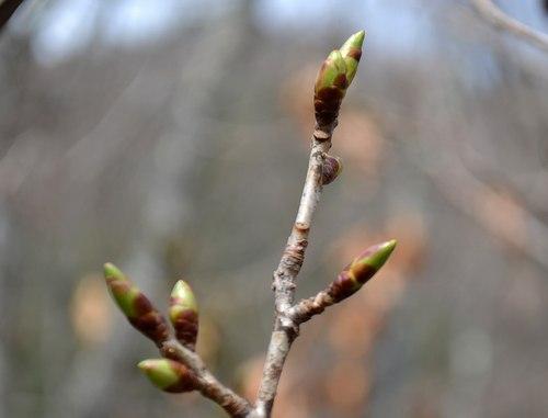 梅は咲いたが桜はまだまだ ・・・_b0102572_15253022.jpg