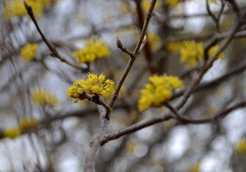 梅は咲いたが桜はまだまだ ・・・_b0102572_15335793.jpg