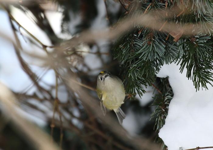 枝の間から・・キクちゃん_c0113597_12440028.jpg