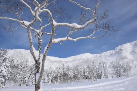 2019年2月3日快晴の大雪山旭岳で粉雪と戯れる_c0242406_09592417.jpg