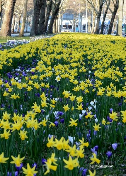 クロッカスが咲き乱れ_a0153807_02315932.jpg
