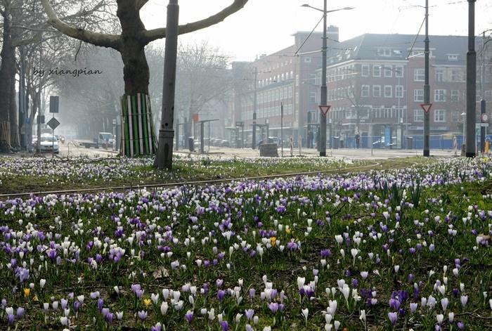 クロッカスが咲き乱れ_a0153807_02330902.jpg