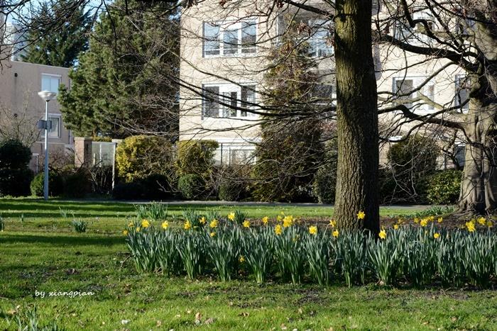 クロッカスが咲き乱れ_a0153807_02342990.jpg