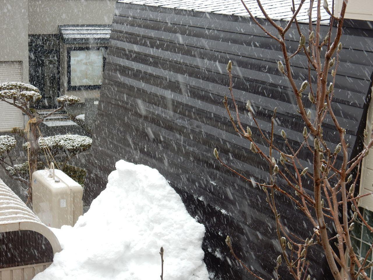 雪になりました_c0025115_21143541.jpg