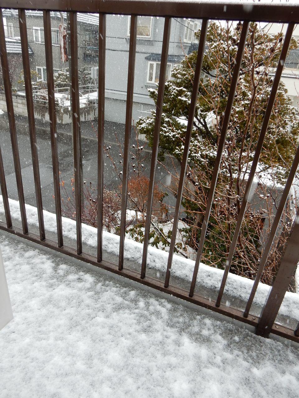 雪になりました_c0025115_21145722.jpg
