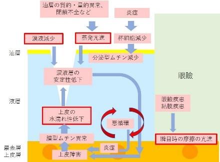 ドライアイのお勉強 その2 (1131)  マイボーム線機能不全_f0088231_15291657.jpg