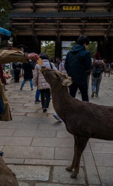 奈良の鹿_e0363038_10193267.jpg