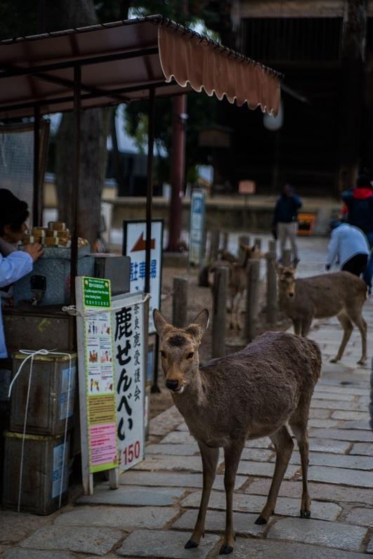 奈良の鹿_e0363038_10195681.jpg