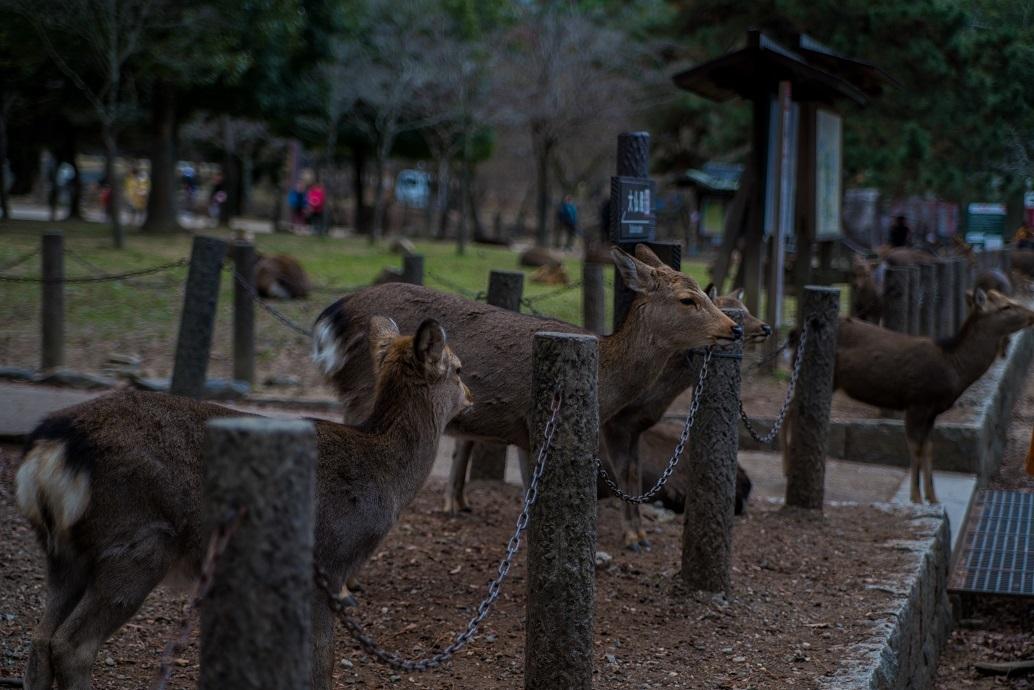 奈良の鹿_e0363038_10200975.jpg
