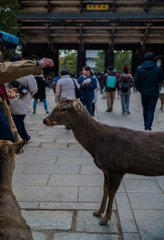 奈良の鹿_e0363038_10202556.jpg