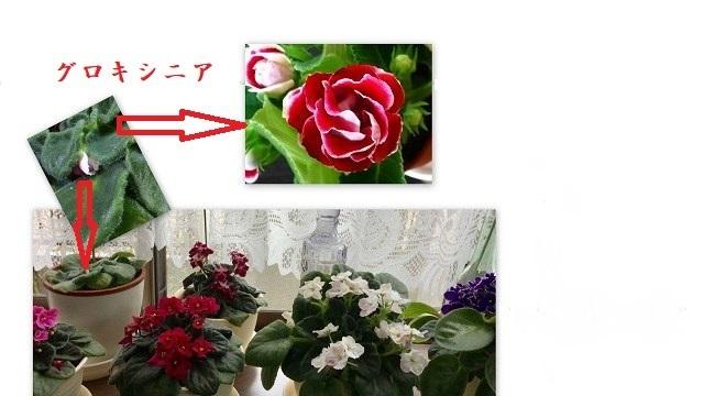 d0131847_23122239.jpg