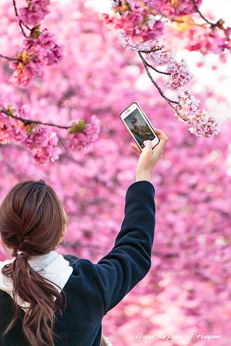 花のある風景 カワヅザクラの風景_b0133053_00270590.jpg