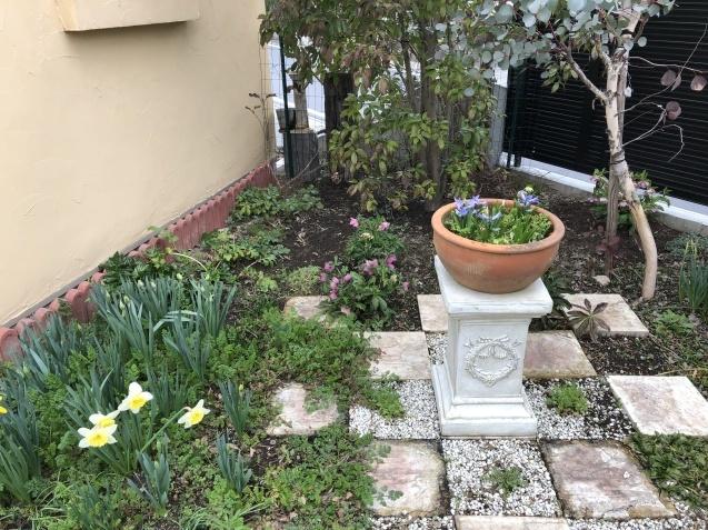 「沈丁花」「「姫リュウキンカ」「ヒヤシンス」植えっぱなしで春の訪れを教えてくれます_a0243064_08082116.jpg