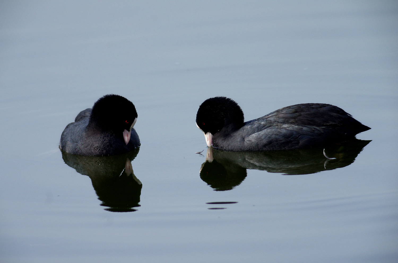 水鳥のコラボ_e0254493_1124174.jpg