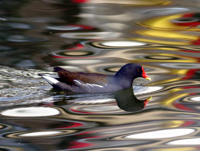 水鳥のコラボ_e0254493_115756.jpg