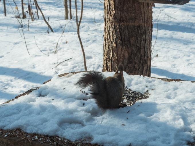 降雪のち雪どけ進む3月に・・春を感じるエゾリス君。_f0276498_11495301.jpg