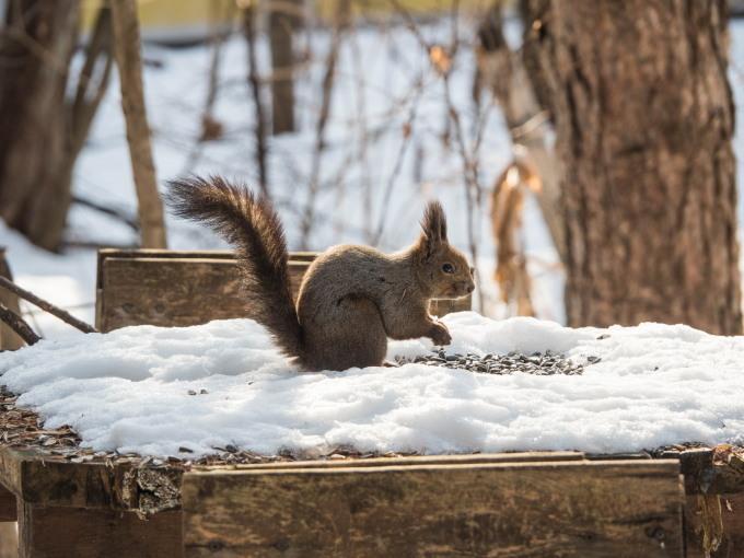 降雪のち雪どけ進む3月に・・春を感じるエゾリス君。_f0276498_11503222.jpg