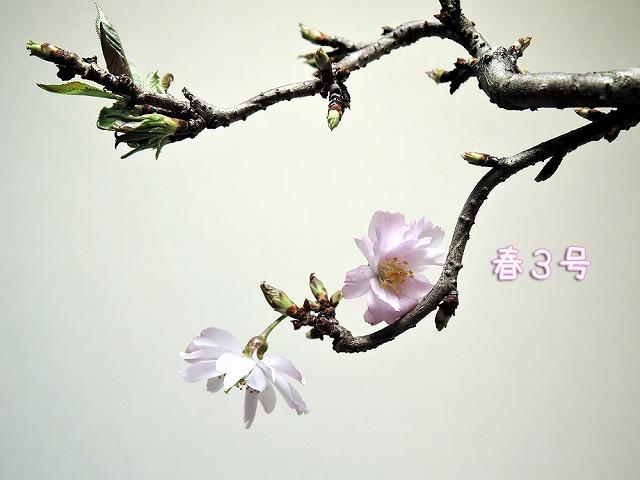 春3号&リアル散歩_c0062832_18281503.jpg