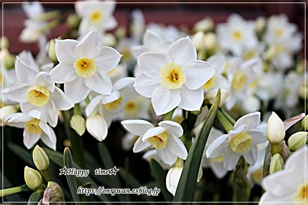のり弁当と寒いけど春は来てます♪_f0348032_17010413.jpg