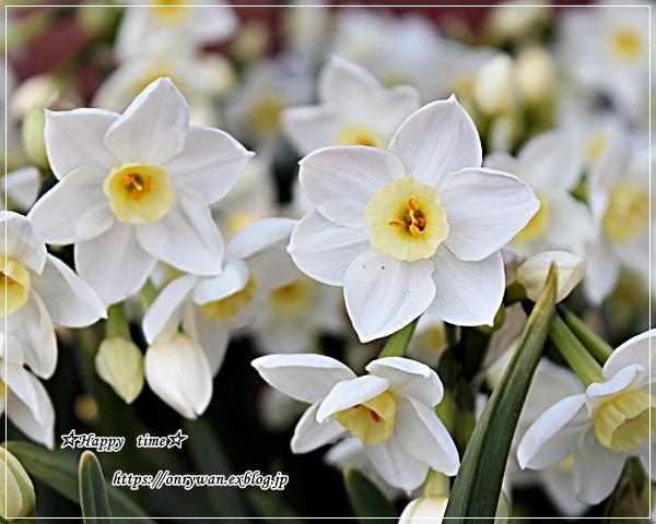 のり弁当と寒いけど春は来てます♪_f0348032_17011030.jpg