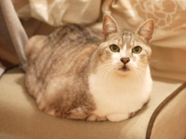 猫のお留守番 大吉くん編。_a0143140_17470016.jpg