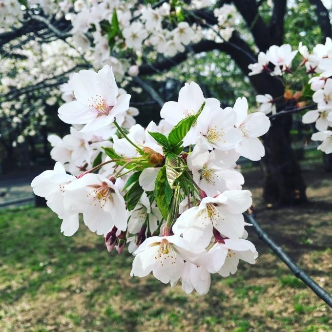 春のジャイロキネシス_d0010742_21592248.jpeg