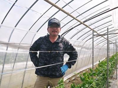 """スナップエンドウ「シャキ甘""""菊光""""」 平成31年は3月下旬からの出荷予定!現在の栽培地の様子を現地取材!_a0254656_17210312.jpg"""