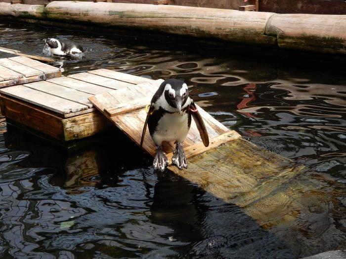 温室にペンギンも黒鳥もいました ③_c0143772_13574728.jpg