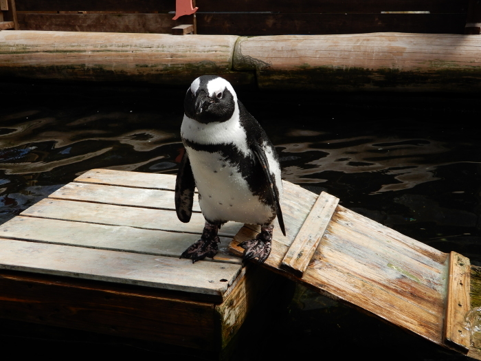 温室にペンギンも黒鳥もいました ③_c0143772_13591766.jpg