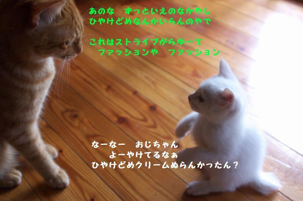 b0061787_08472341.jpg