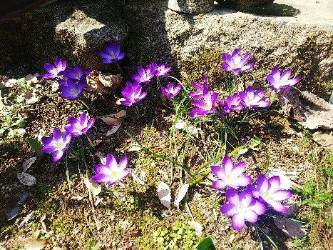 春_e0303187_09125665.jpg