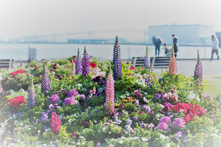 春の朝はやく_e0305388_20574243.jpg