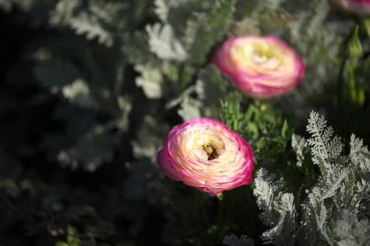 春の朝はやく_e0305388_20580010.jpg