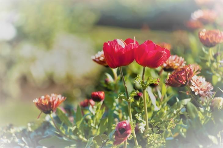 春の朝はやく_e0305388_20581361.jpg