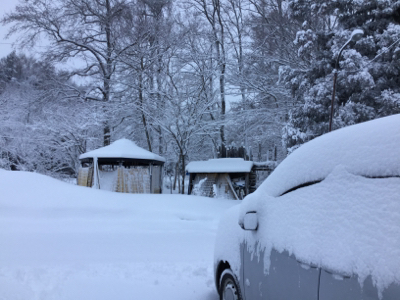 わーい 雪だわ〜_a0096989_22094266.jpg