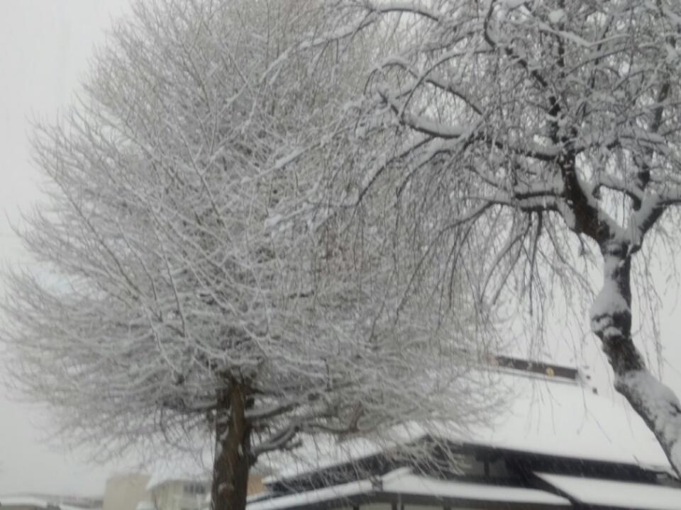 雪!_f0326895_07444597.jpg